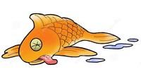poissons-de-la-mort-4695672